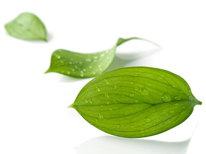 Le respect de l'environnement et l'engagement développement durable
