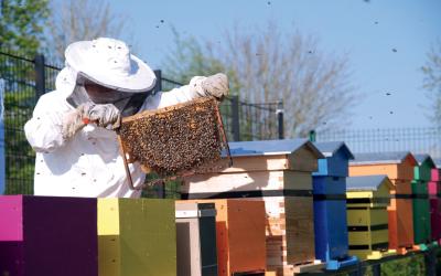 Alliance Partenaires Graphiques contribue à la sauvegarde des abeilles dont la population ne cesse de décroitre au fil des ans